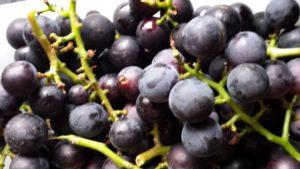 Weintraube Uva Fragola Erdbeertraube