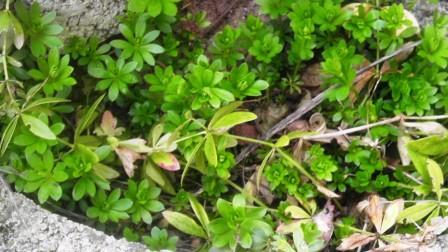 20 Pflanzen (Gemüse und Kräuter) schon im März ernten!