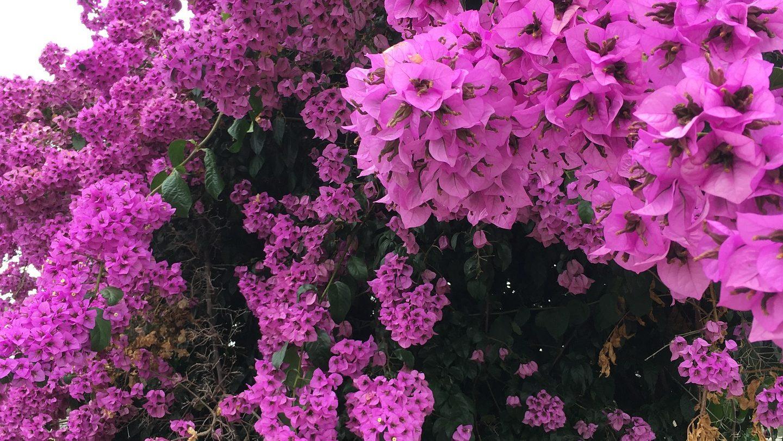 Gut düngen im Frühjahr für Blütenreichtum