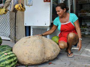 Riesenkartoffel